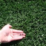 fakegrass